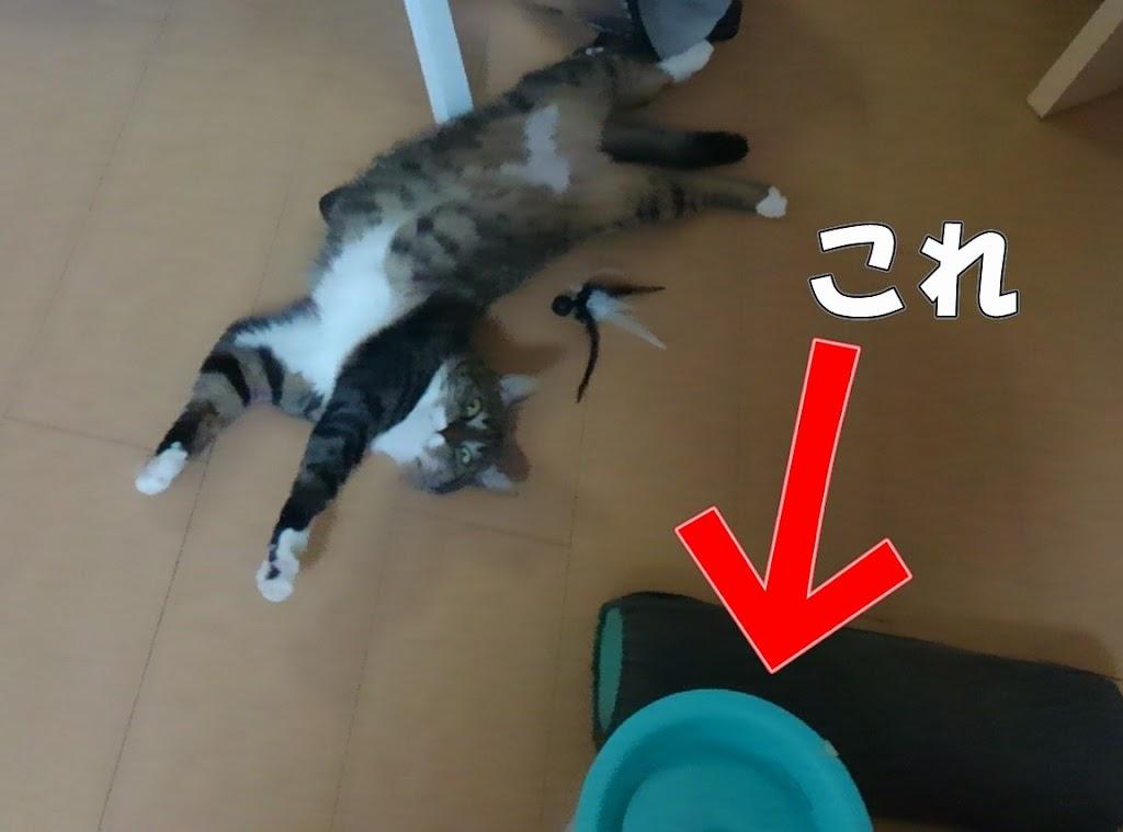 猫と自動給水器