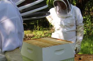 PLC Beekeeping Class 5/20/18 - IMG_8128.jpg
