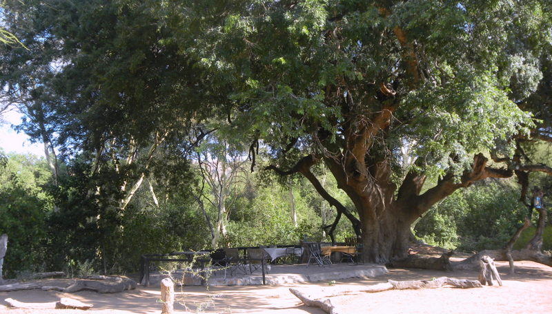 Tuli Block - our communal outdoor area under a beautiful tree
