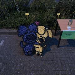 Weekend Noord Holland 2016 - IMG_6738_800x534.JPG