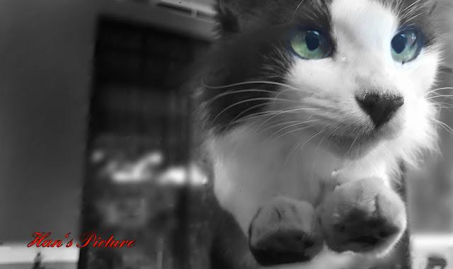 Kucing ku Bernama Gemok