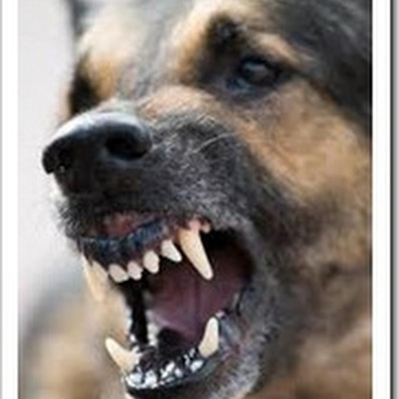 The Dog Bite (कुत्ते का काटना)