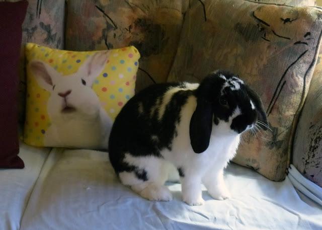 Douglas Bunny Rabbit