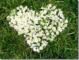 margaritas flores (61)