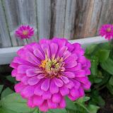 Gardening 2012 - 115_2046.JPG
