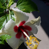 Gardening 2012 - 115_1551.JPG
