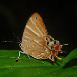 Madagascar2011