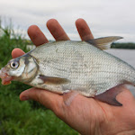 20140603_Fishing_BasivKut_002.jpg