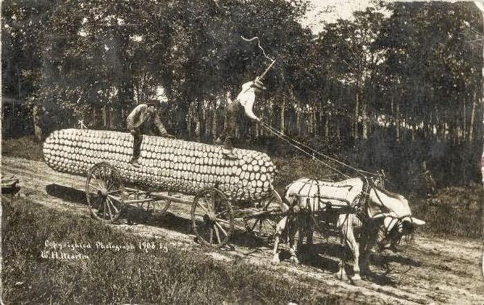 Um milho gigante demonstrando a fartura de Kansas