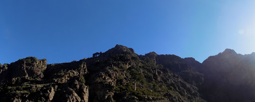 En vue du pin remarquable de la montée avec au fond la crête Capu a e Poste - Punta di a Scaffa