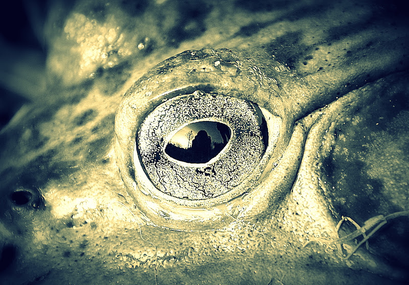 Occhio alla rana... di cristins