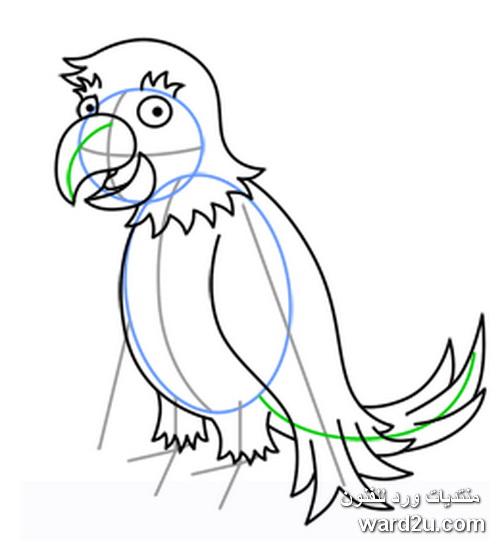تعلم رسم الطيور والحيوانات بخطوات تعليميه مصوره للاطفال