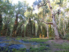 Fantastic Paperbark swamp with springs at Carmor Plains. Late in the year, these springs hold the only remaining water for all the wildlife.