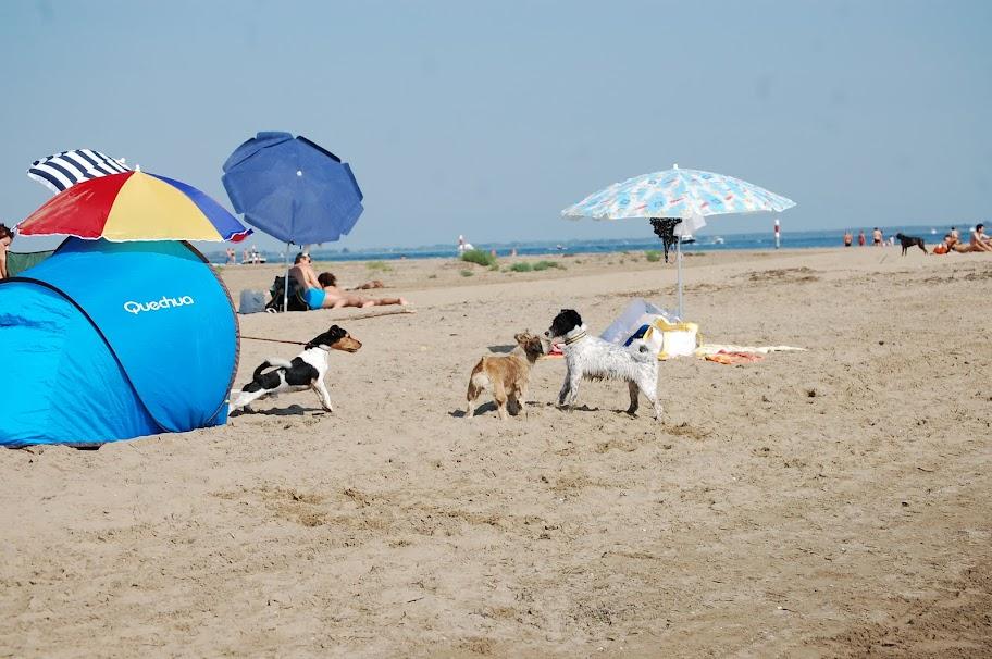 Итальянский собачий пляж..