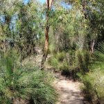 Track to Warrah Lookout (218138)