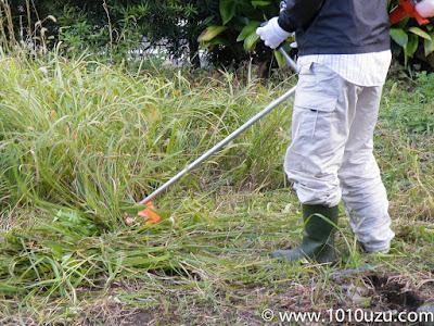 刈払機で草刈り