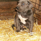 Star & True Blues February 21, 2008 Litter - HPIM1068.JPG
