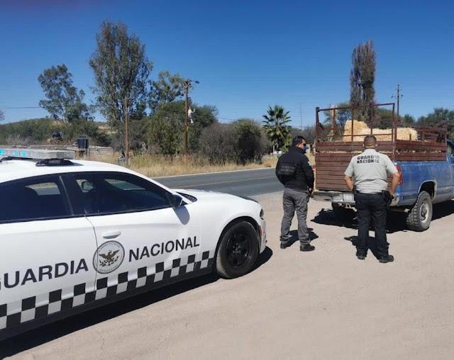 ASEGURA GUARDIA NACIONAL CERCA DE 250 KILOGRAMOS DE MARIHUANA OCULTA EN PACAS DE AVENA