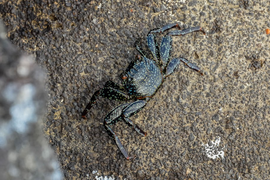galapagos - Galapagos_FB_2-29.jpg