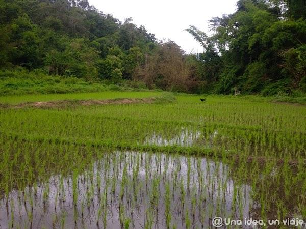 trekking-norte-tailandia-minorias-etnicas--unaideaunviaje.com-19.jpg