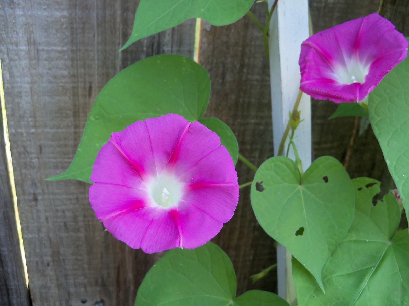 Gardening 2011 - 100_7788.JPG