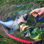 20140624_Fishing_BasivKut_005.jpg