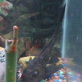 Fish - IMG_0076.JPG