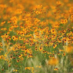 Yellow Fields by Amory Godwin Grijaldo - Landscapes Prairies, Meadows & Fields