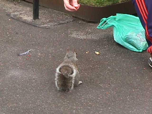 3100Squirrels in Queen's Park