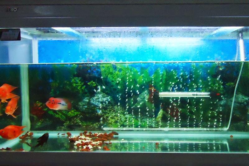 Infotechandroid lampada led acquario for Lampada acquario