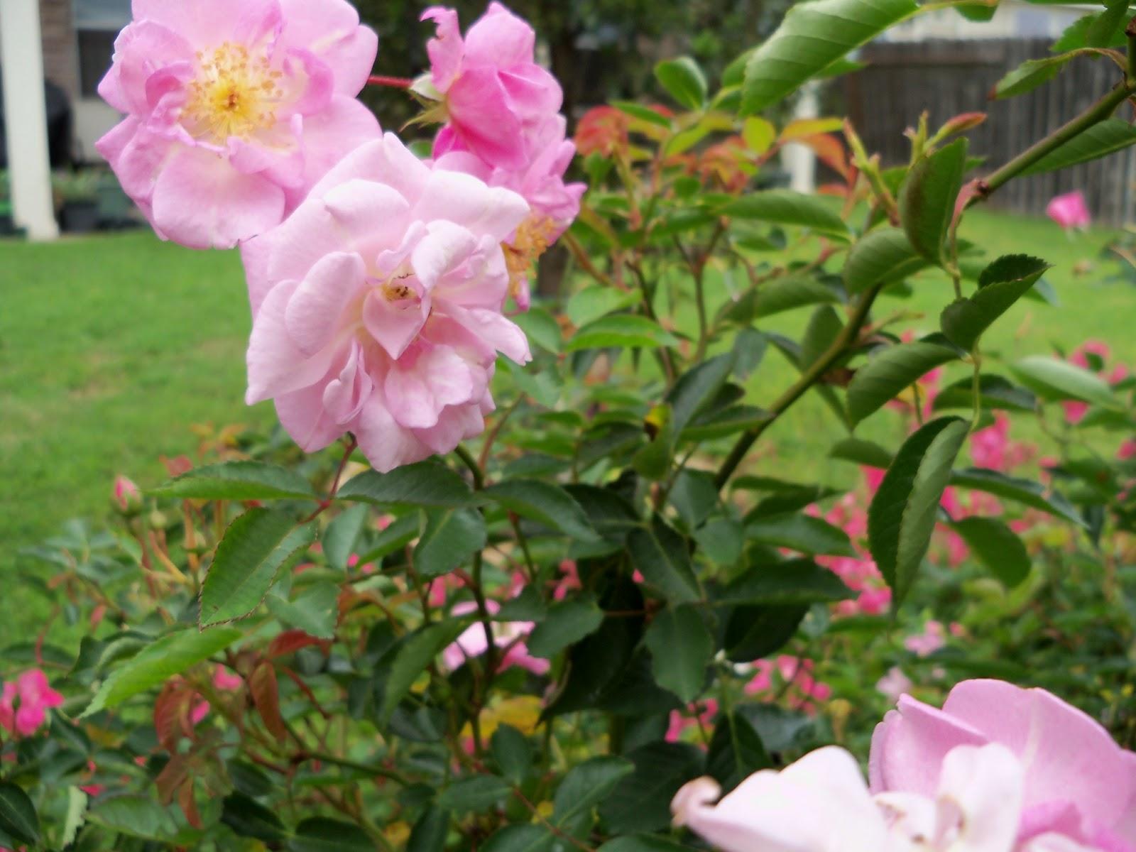 Gardening 2012 - 115_1369.JPG