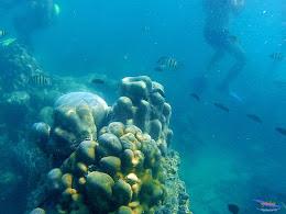 family trip pulau harapan, 1-2 agustus 2015 gopro 06