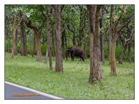 _MG_4054_www.keralapix.com_Mudumalai Bandipur Forest Road
