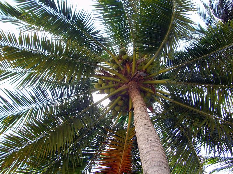 Achtung fallende Kokosnüsse