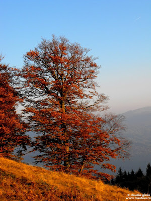 stejarul in flacarile toamnei