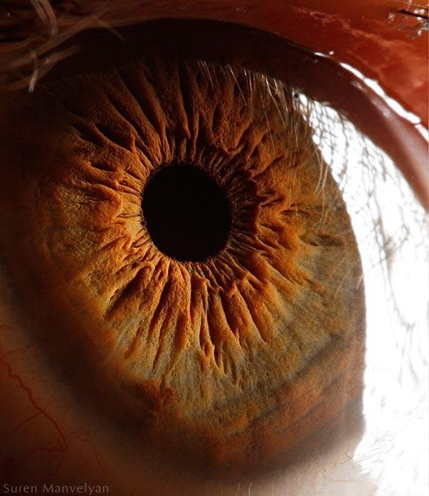 human eyes 1 (6)