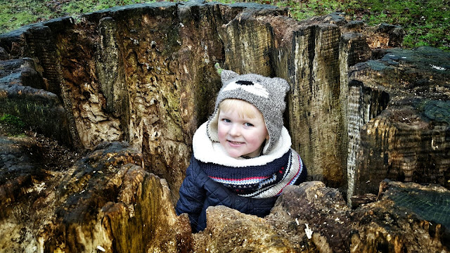 Our little boy playing in an old tree stump
