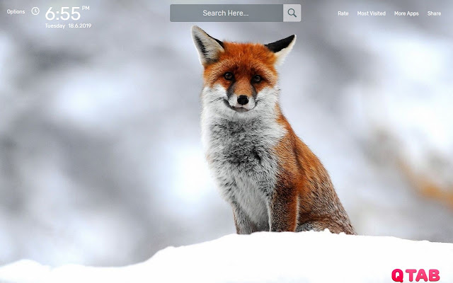 Cute Foxes Wallpapers New Tab Theme