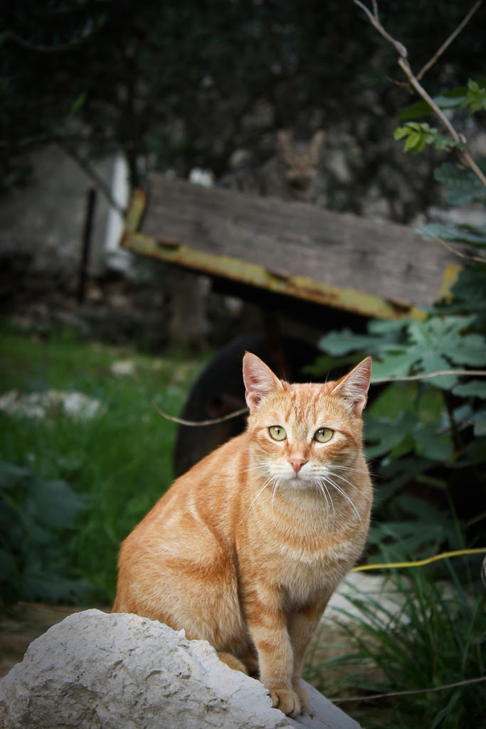 Croatia - Silba, Zadar, sky, cats, windows - Vika-8177.jpg