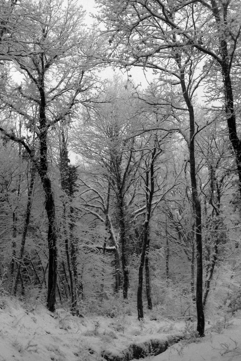 Il bosco innevato di edmond06