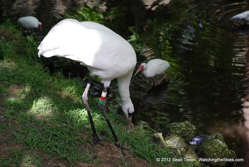04-07-12 Homosassa Springs State Park - IMGP4560.JPG