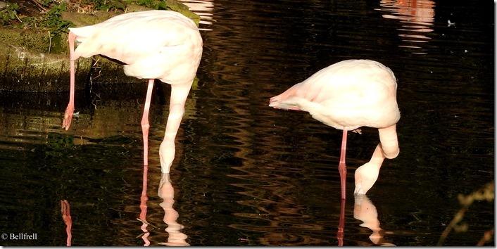 Flamingogymnastik 2