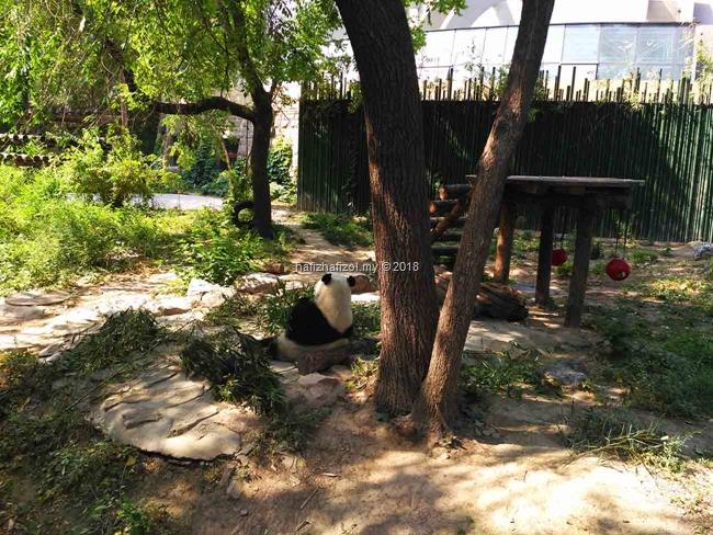 panda zoo di beijing