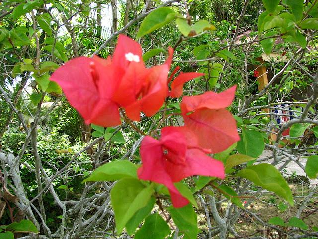 Из зимы в лето. Филиппины 2011 - Страница 3 IMG_0032