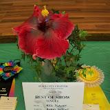 Hibiscus Show - 101_1155.JPG