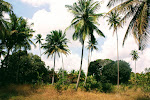 Shamba in Tanzania