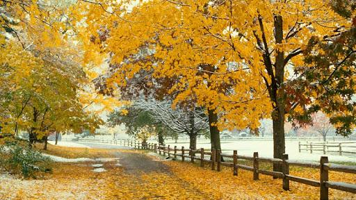 Leaf Peeper's Paradise, Maine.jpg