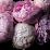 Caroline Laneau's profile photo