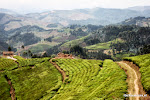 Rwanda West