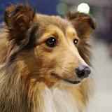 Międzynarodowa Wystawa psów - RZESZÓW 2010